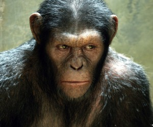 Dawn of the Planet of the Apes Movie 300x250 Dawn of the Planet of the Apes (2014)