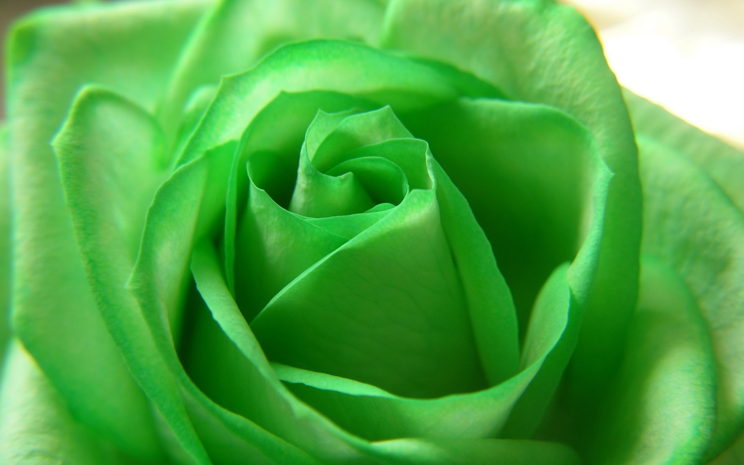Tags: Flowers , Green ...