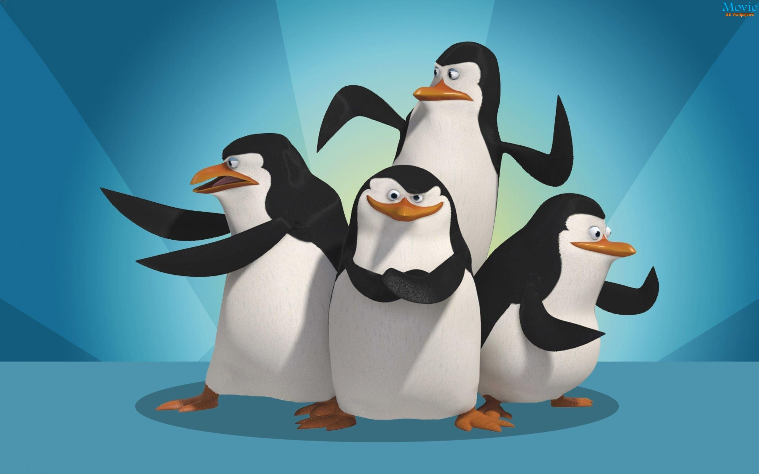 Penguins of madagascar movie hd wallpapers - Madagascar wallpaper ...