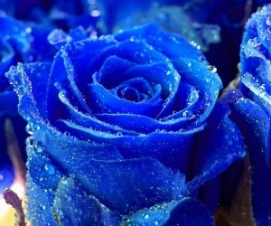 Blue Flowers Wallpapers