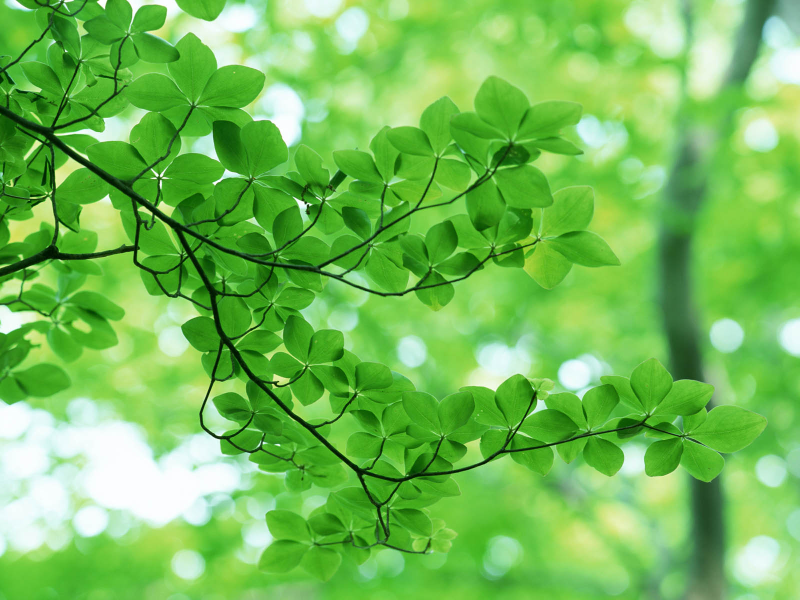 Green Flowers Wallpapers - Movie HD Wallpapers