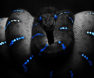 Snake-HD-Resolutions-Images