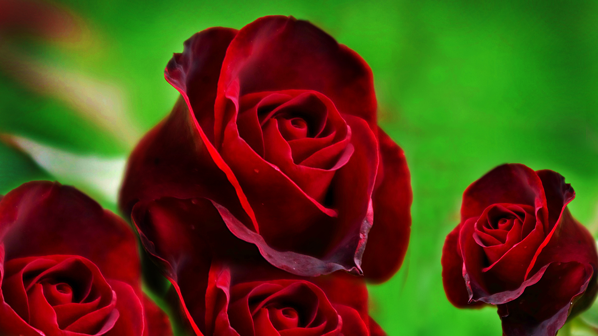 Red Rose HD Wallpapers - Movie HD Wallpapers