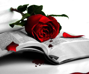 wonderful-love-me-red-rose-wallpaper