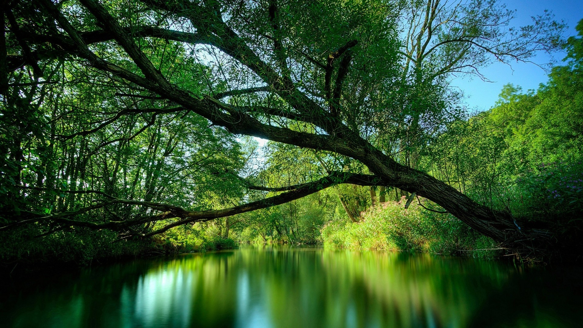 green-river-woods-tree