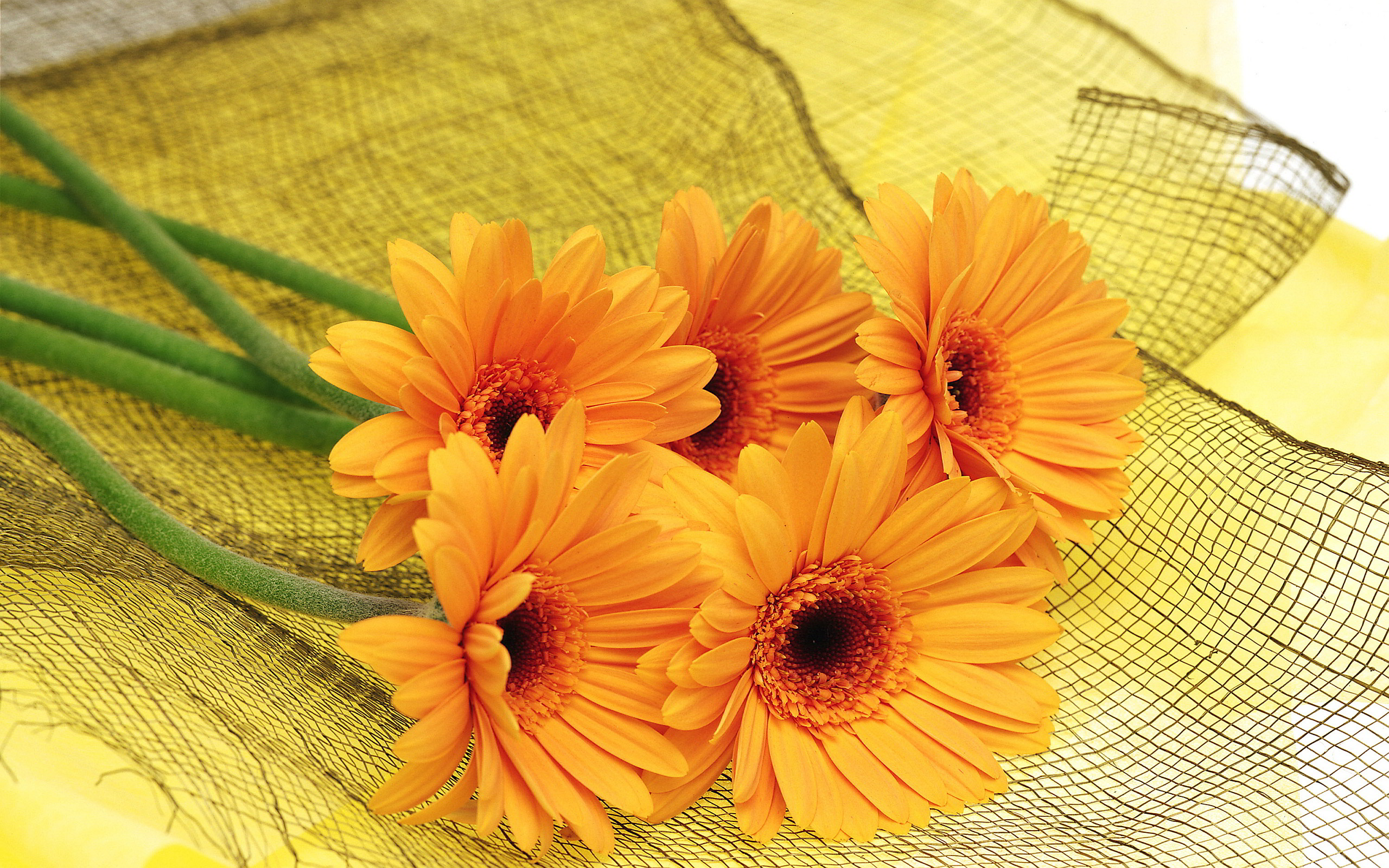 Orange Flowers Wallpapers Movie Hd Wallpapers