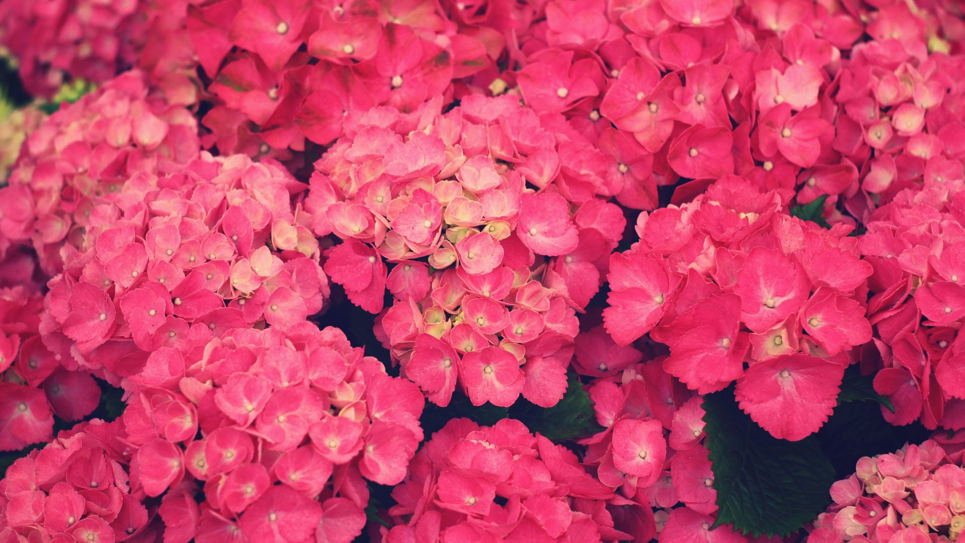 Pink Flowers Wallpapers Movie Hd Wallpapers