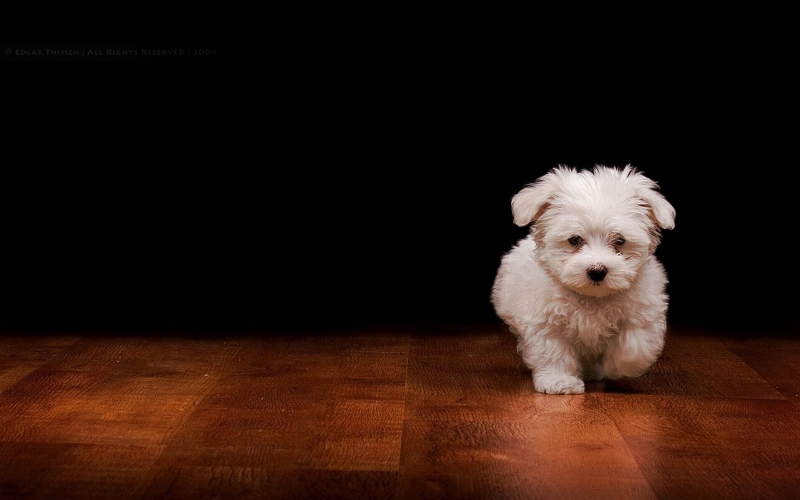 Dog wallpapers movie hd wallpapers for Wallpaper hd home movie